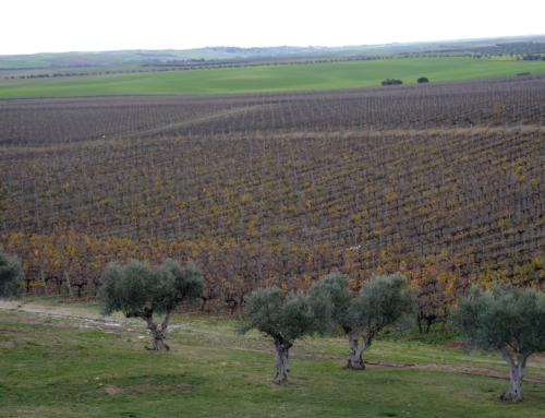 El sector vitivinícola español participa en la COP25 por la lucha contra el cambio climático